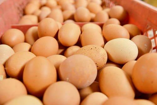 竟然有如此多的英国小学生认为鸡蛋是这样来的!