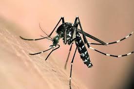 橙县一儿童被蚊子叮咬后 感染西尼罗河病毒 病毒可导致人类罹患神经系统疾病甚至死亡