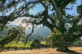9月起,加州4年级学生及其家人可以免费进入19个州立公园!